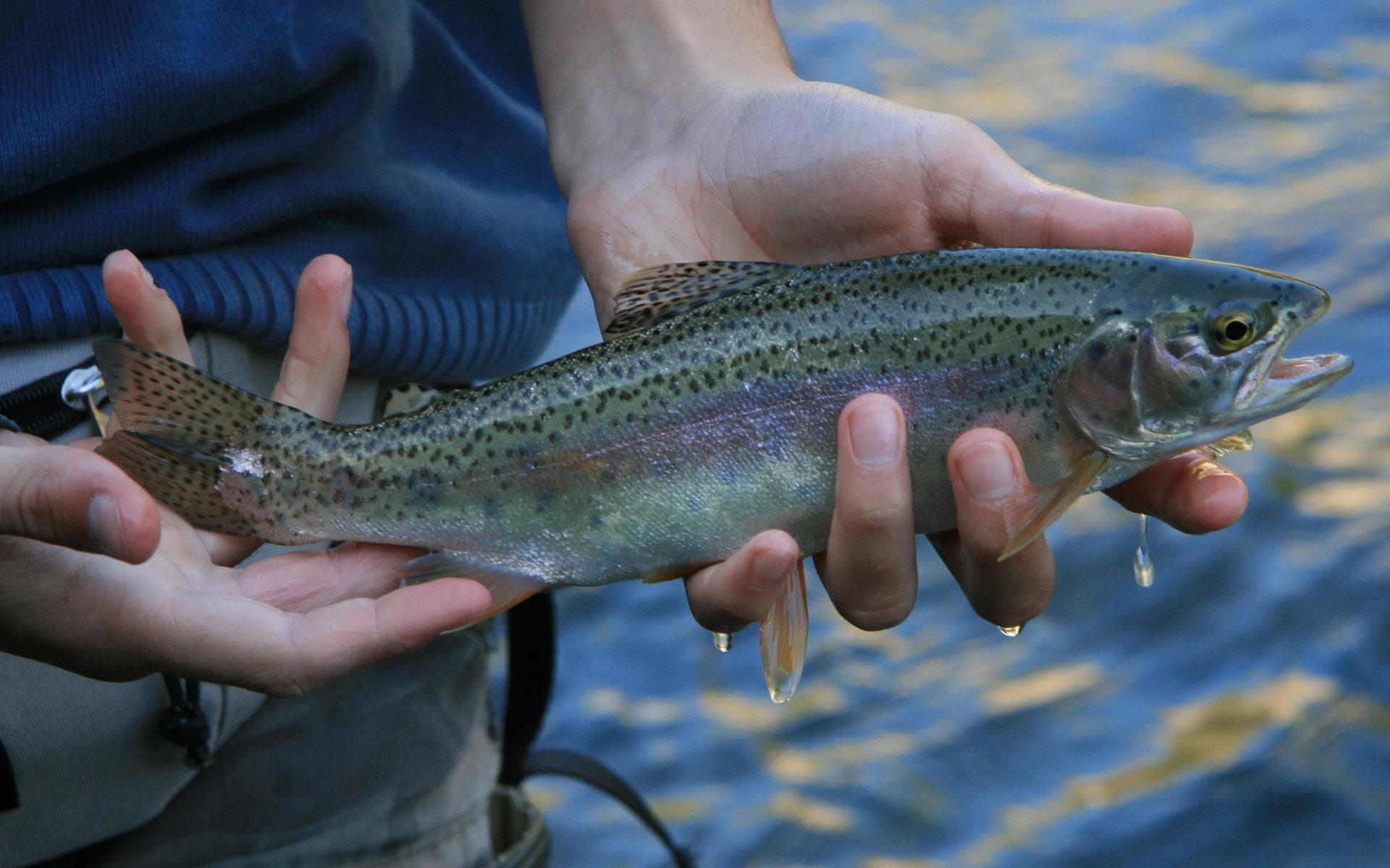 Laboratorio Pesca Sport Lanza